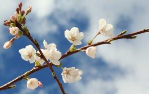 5 Blossom